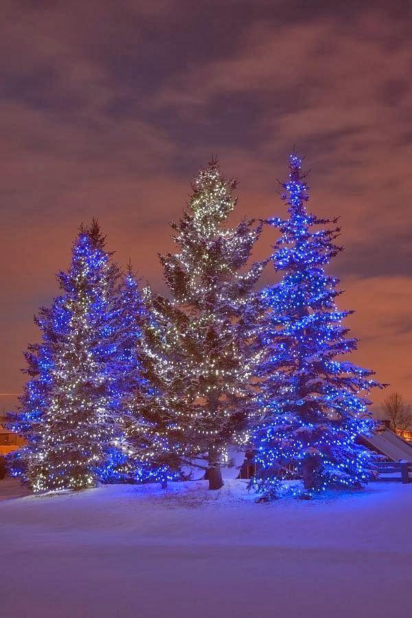 Stunning Picz: Calgary, Alberta, Canada Best Christmas Lights #Tumblr bestchristmaslights.tumblr.com