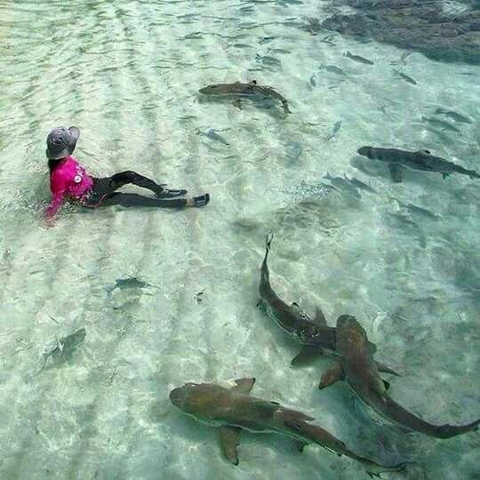 Friendly Sharks of Raja Ampat... - Jakarta Picture ...