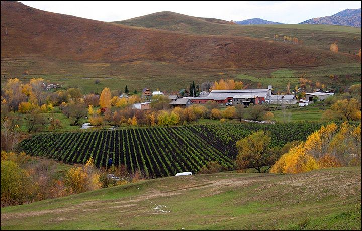 #RUSSIA #WINE #SWD #GREEN2STAY Coming soon: 'Chateau Permafrost', wine from Siberia By Tamara Zubchuk26 September 2016 Russian entrepreneur gets French help restoring and developing viticulture to produce our very own Côte de Altai Mountains.