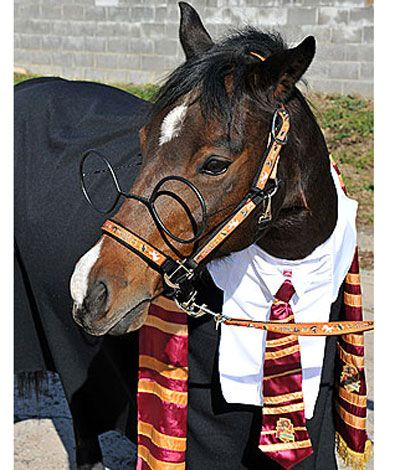 """""""Harry Potter"""" Horse  13 Chickens, Rabbits, Horses And More Dressed Up For Halloween"""