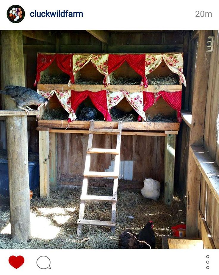 nesting box curtains to encourage more egg laying