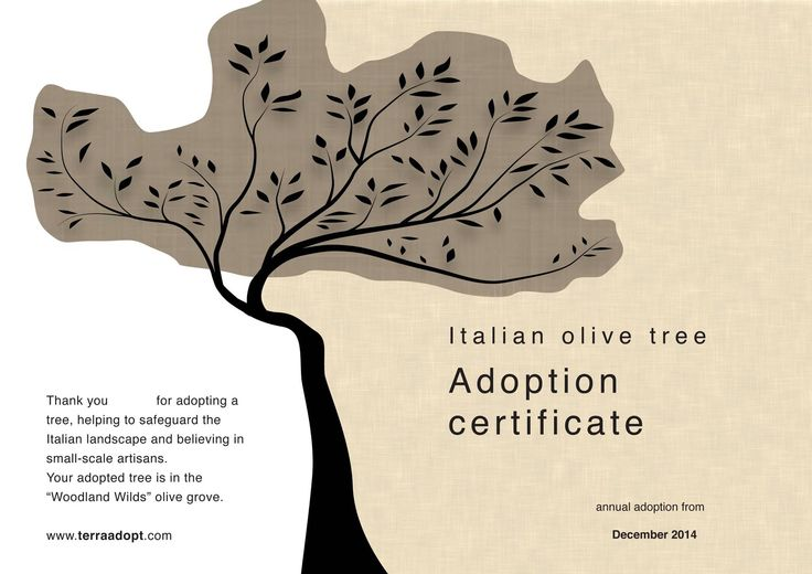 Adopt and olive tree in Italy and receive three bottles of unadulterated extra virgin olive oil and a personalised adoption certificate. #TerraAdopt #adoptanolivetree