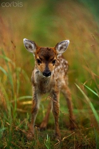 """This is why I can't eat deer meat. Too precious."" Some people say. Me, ""give me a gun and filet knives"""