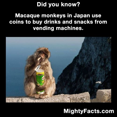 Best Images About Interesting On Pinterest Wtf Fun Facts - Monkey knows how to operate vending machine