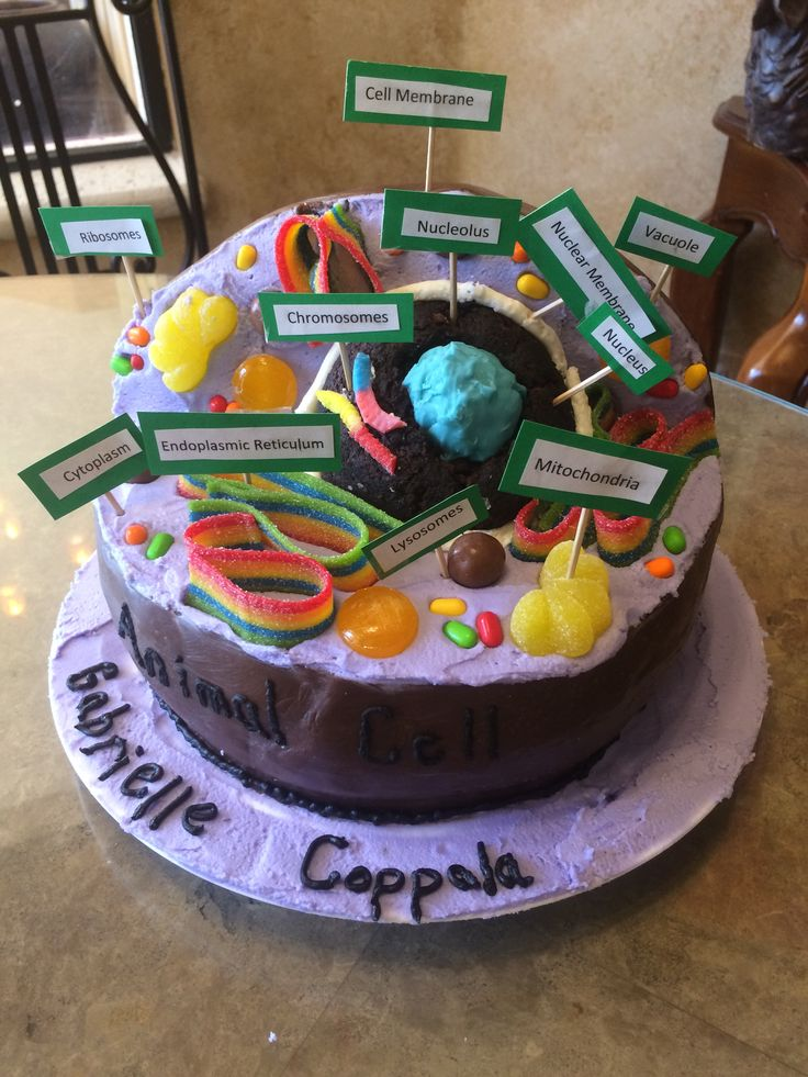 Animal Cell Cake | Animal Cell 3D cake | Cell model, Cell