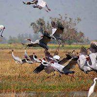 Tonle Sap Lake Cambodia | Siem Reap Angkor | Tours, Boats, Prek Toal, Kampong Phluk, Chong Khneas | Cambodia