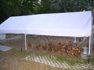 Stealth Survival: Prepping Projects - Temporary Chicken Coop lattice keeps predators from digging in