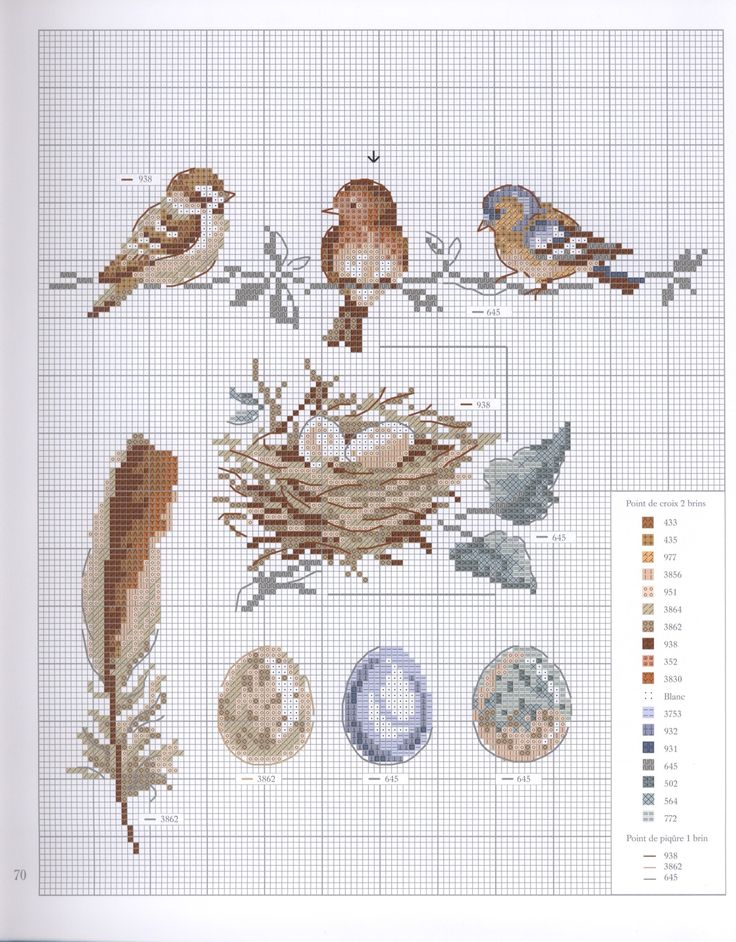 birds and their stuff