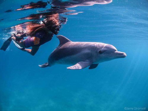 Swimming with wild dolphins in Ponta do Ouro Mozambique.
