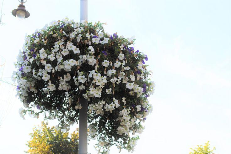 #flowerporn #beautiful #nature #instablooms #love #spring #blooms #petal #buyankin #flowerstagram #blossom #florals #floweroftheday #insta_pick_blossom #flowerstyles_gf #sopretty #pretty #flowerslovers #floral #summer #botanical #botanical #plants #flowers #petals #flowermagic #flowersofinstagram #flower #bloom