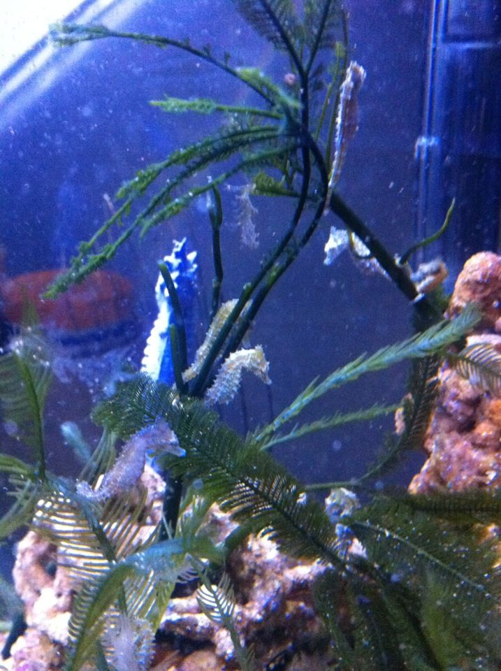 45 best images about fishtanks for Seahorse fish tank