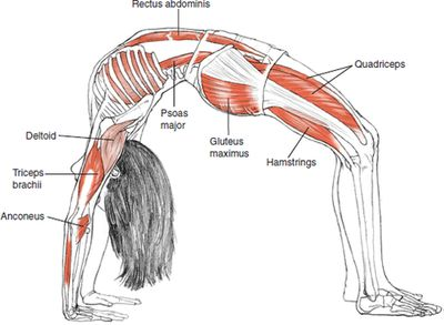I miss this pose terribly after my back injury I haven't tried it since due to extreme pain. However this is how I used to pop my back. Urdhva Dhanurasana Upward Bow Pose, Wheel Pose © Leslie Kaminoff's Yoga Anatomy B E N E F I T S — Stretches the chest and lungs — Str...
