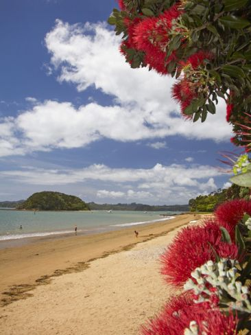 Phutukawa Tree and Beach, Paihia, Bay of Islands, Northland, North Island, New Zealand by David Wall. Print from Art.com, $29.99