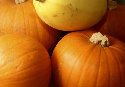 A cluster of ripe pumpkins sits on a prep table inside of the Ristorante Avanti kitchen in Santa Cruz. (Kevin Johnson/Sentinel)