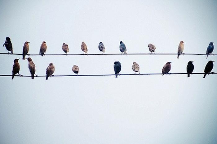 birds.. birds.. birds