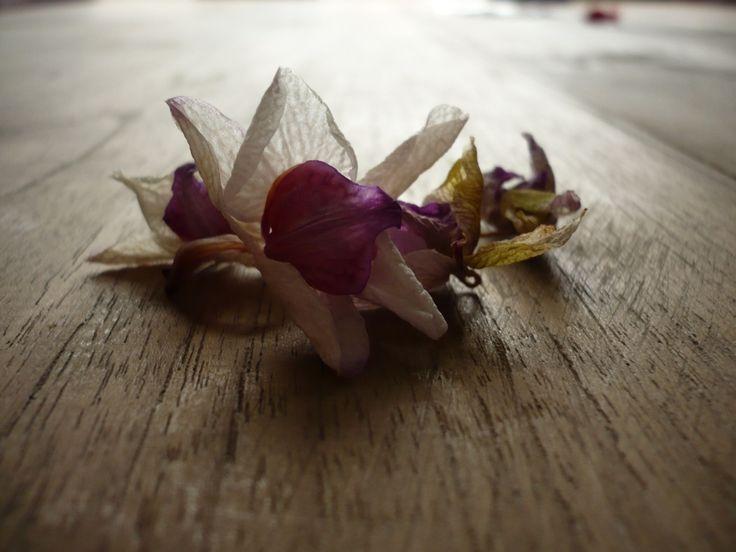 Droge bloemen...