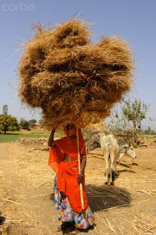 A woman farm worker. Bhil Tribe in Rajasthan , India