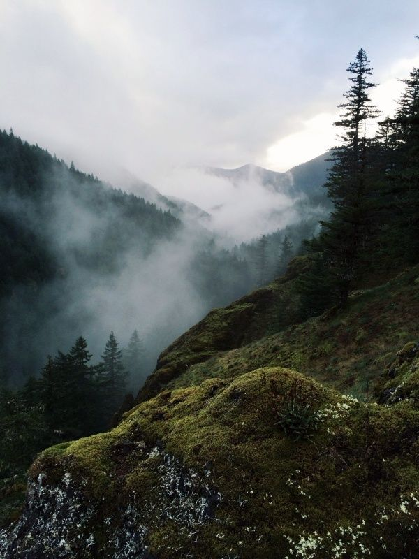 Salmon-Huckleberry Wilderness. Mt Hood National Forest, Oregon | Kevin Russ | VSCO Grid