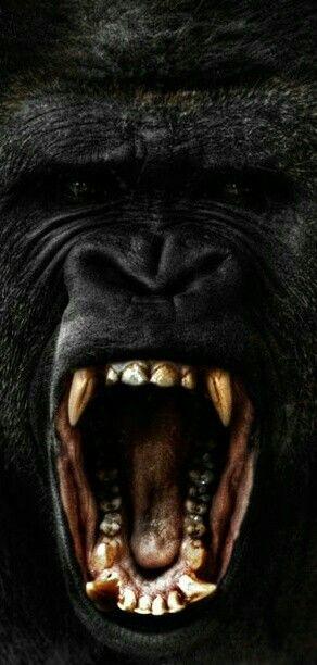 1000+ ideas about Gorilla Tattoo on Pinterest | Mike Giant ... - photo#13