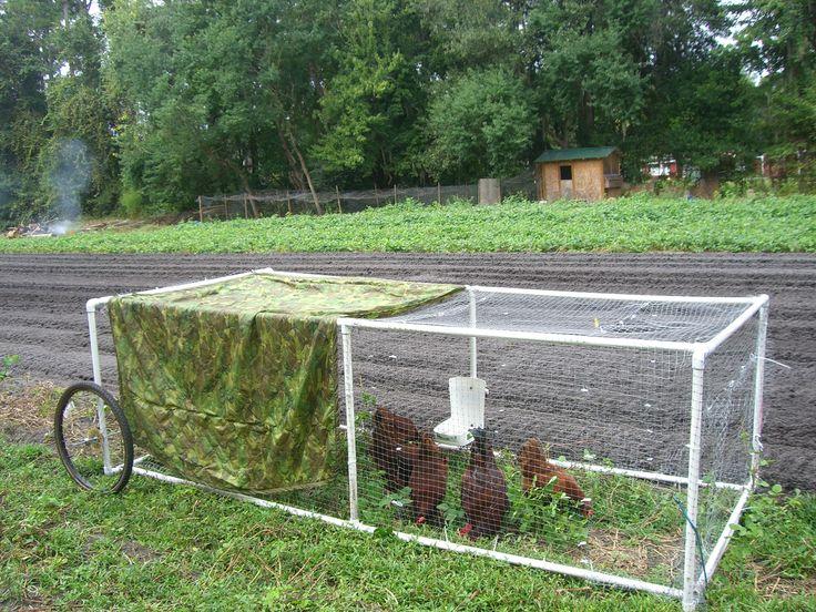 1000 ideas about chicken tractors on pinterest coops - Jacksonville craigslist farm and garden ...
