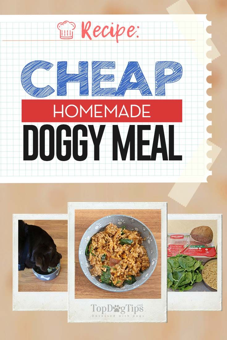 Recipe Cheap Homemade Dog Food Meal Positive Dog Training