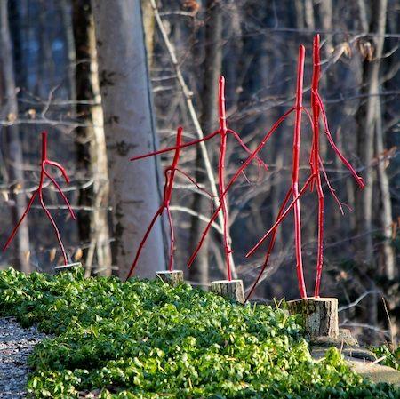 Ashbee Design: Red Dancing Sticks • DIY for the Winter Garden: Dancing, Red Dance, Ashb Design, Dance Twig, Winter Gardens, Diy, Gardens Stuff, Ashbe Design, Dance Sticks