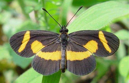 Elf butterfly. It's on my photo bucket list.