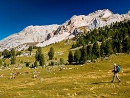 Der Naturpark der Ampezzaner Dolomiten, der im Jahr 1990 gegründet wurde und sich über eine Fläche von 11.000 Hektar nördlich von Cortina erstreckt...