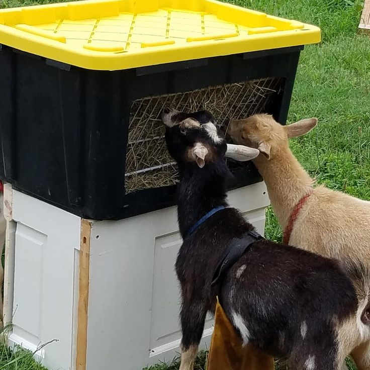 778 Best Goat Farm Images On Pinterest: 25+ Best Ideas About Pygmy Goat House On Pinterest