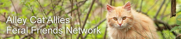 """Feral Friends Network - Alley Cat Allies. Consider joining. Learn more here. """"Alley Cat Allies hears from thousands of people every year looking for help with cats. Some people want to know how they can help an outdoor cat; some need veterinary care for their feral cat colony; some are working to change policies or persuade decision makers. Alley Cat Allies can't be everywhere to provide assistance."""