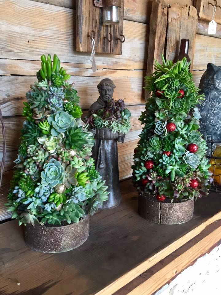 Christmas Succulent Decor.Succulent Topiary Christmas Trees Garden Container