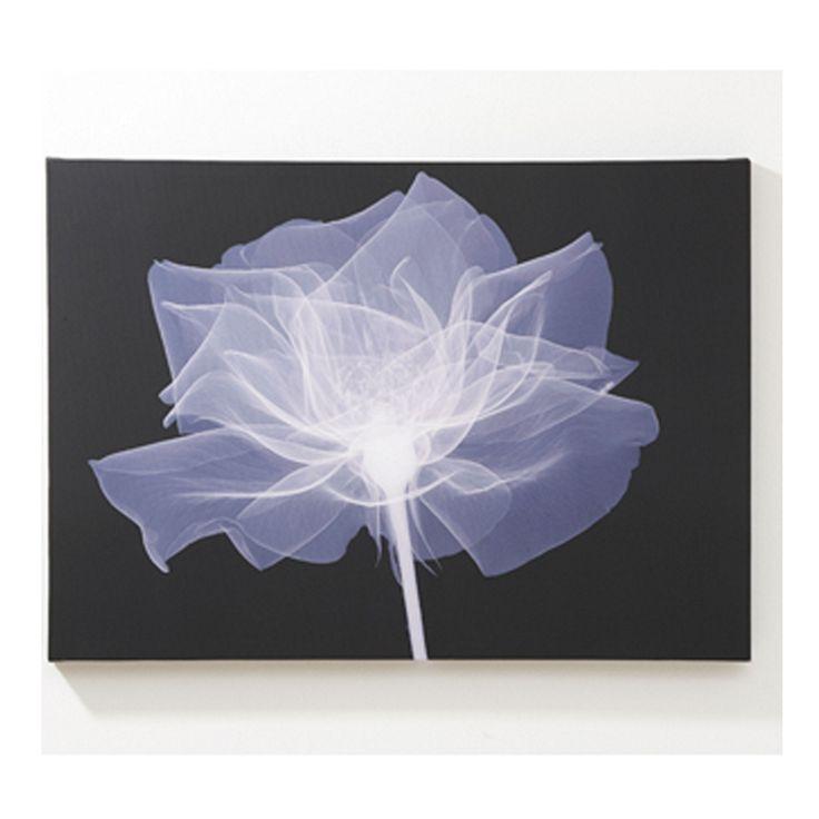 Graham & Brown Printed canvasX ray rose wall art | Debenhams