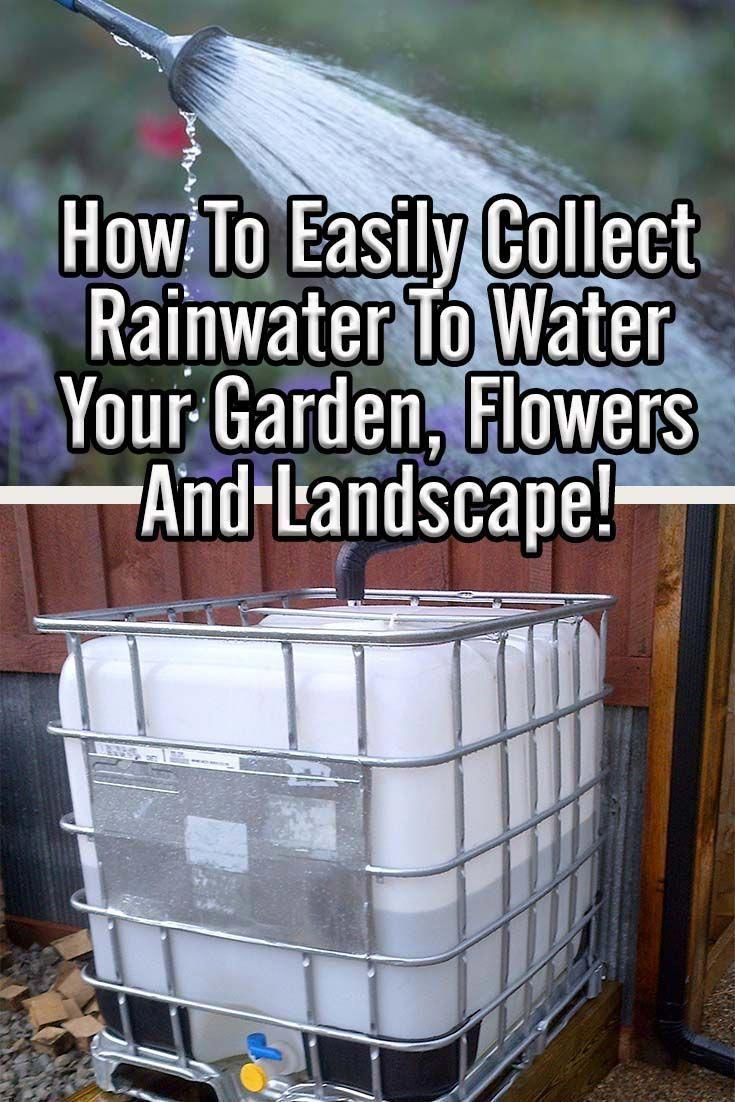 1e129576869dd68d95403f96914f1e25 - How To Catch Rainwater For Gardening