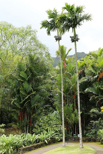 95 best buy rare and exotic palm and plants seeds from for Indoor botanical gardens