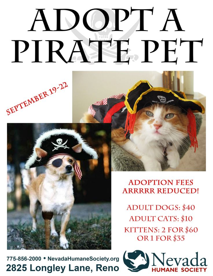 33 best nhs events and fundraisers images on pinterest fundraisers talk like a pirate day september 19 solutioingenieria Gallery