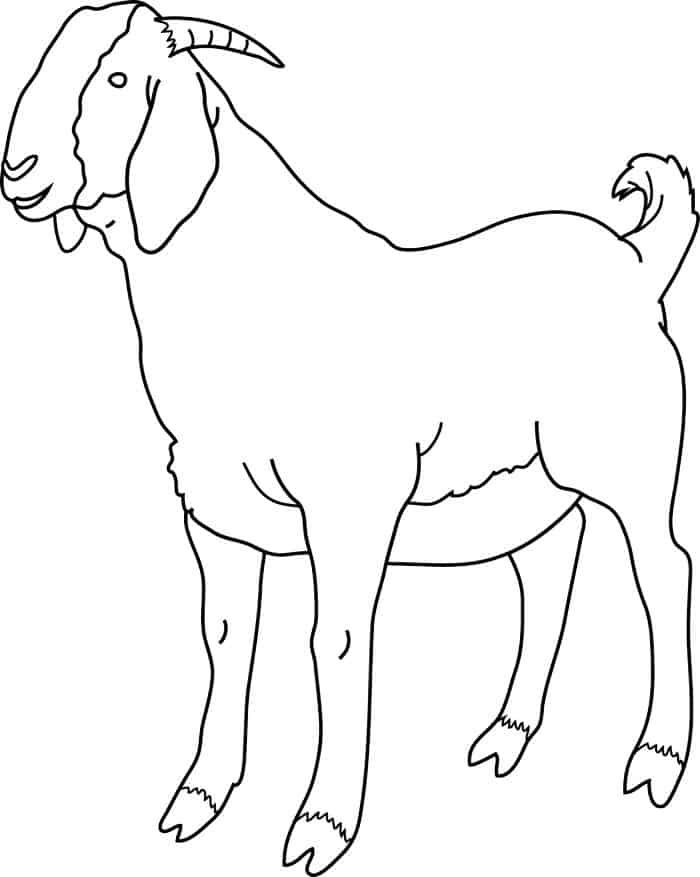 Boer Goat Coloring Pages In 2020 Animal Coloring Pages Shape Coloring Pages Boer Goats