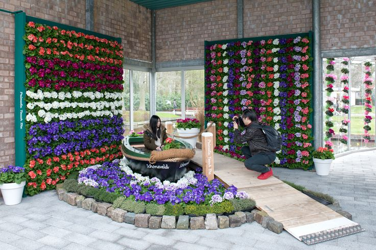 flowering walls with Primula Touch Me