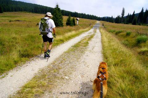 Z psem na szlaku
