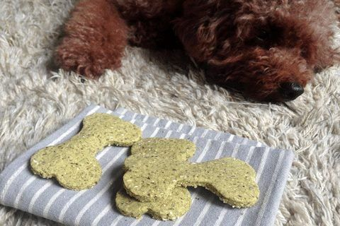 Top 10 Recipes For Homemade Dog Breath Treats | The Dog Guide