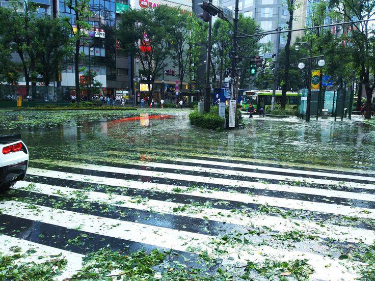 """うさまる@おでん、MHXXさんのツイート: """"なにこれ!!私自宅の中で死ぬの?(´・ω・`)雷、雨、風、氷!! 網戸ボロボロ!はまだ良くて、窓割れそうっ(´・ω・`) https://t.co/ly2Qq21xRk"""""""