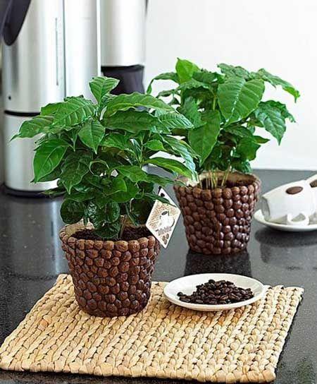 maceteros-decorados-con-granos-de-cafe