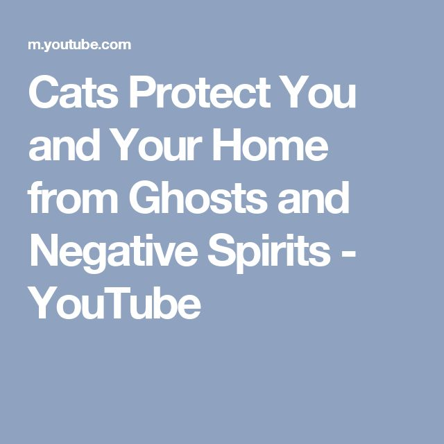 Cats Protect You and Your Home from Ghosts and Negative Spirits - YouTube