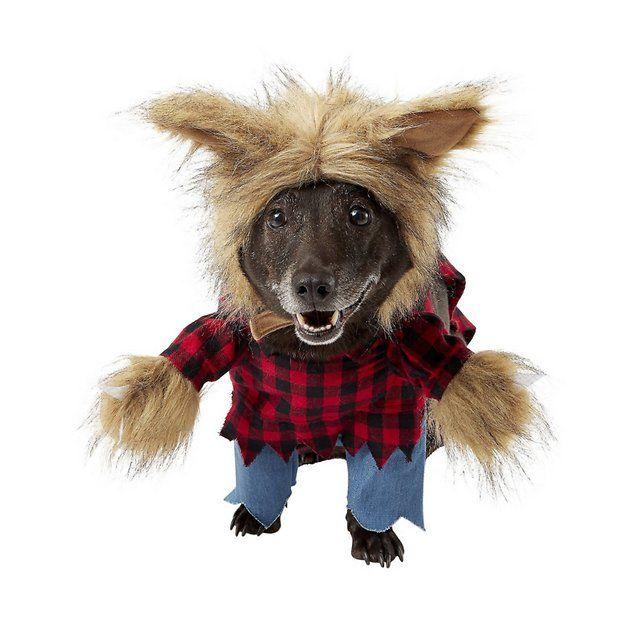 Buy Frisco Werewolf Dog & Cat Costume, Large at