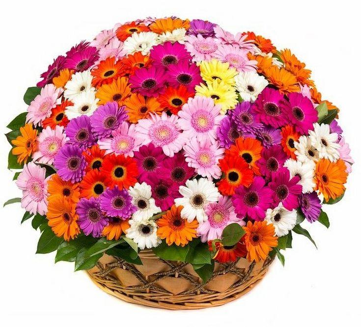 Картинки крупные цветы букеты