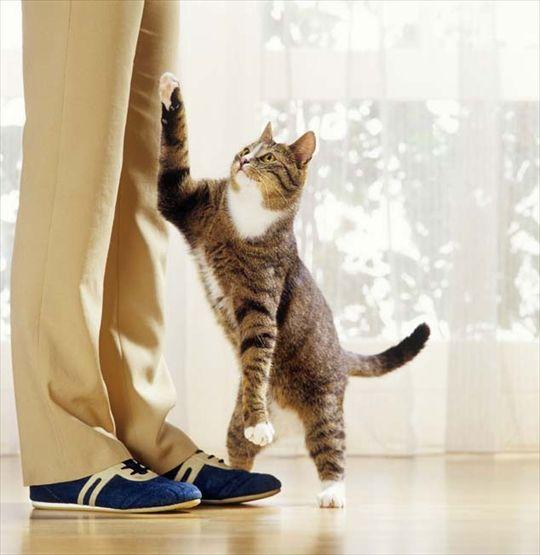 Come educare il gatto