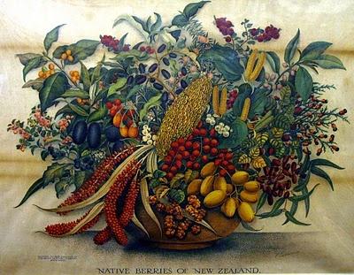 Native berries of NZ
