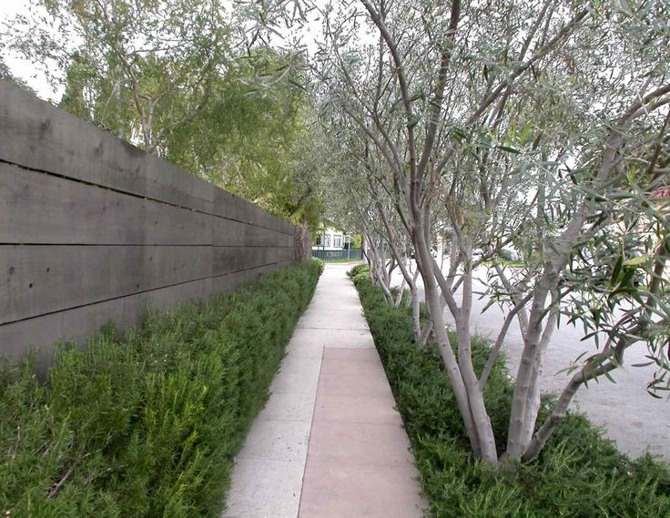 Would love a line of I've trees along north wall, under planted with tall billowy grass.