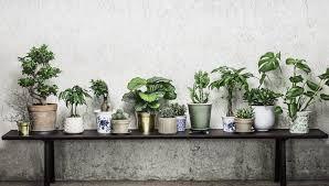 Bilderesultat for grønn interiør