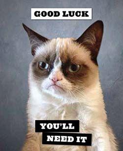 Grumpy Cat Good Night Memes