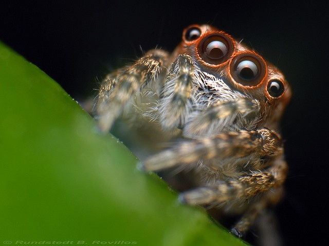 spider: Inspiration Insectes, Insects Artworks, Creepy Crawler, Spiddi Sense
